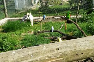 Ausflug Vogelpark